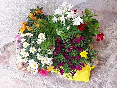 Pflanzpäckchen Frühling