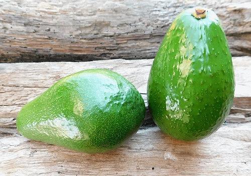"""Avocado PER Hkl.I  Sorte """" Fuerte """""""